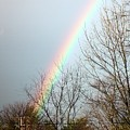 Rainbow by Judd Nathan