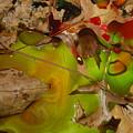 Rainbow Leaves 3 by Alwyn Glasgow
