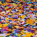 Rainbow Leaves by Mariola Bitner