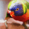 Rainbow Lorikeet by Sheila Smart Fine Art Photography