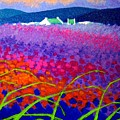 Rainbow Meadow by John  Nolan