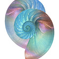 Rainbow Nautilus Pair On White by Gill Billington