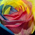 Rainbow Of Love 2 by Karen Musick