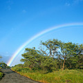 Rainbow Over Treetops by Peter French - Printscapes