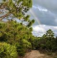 Rainbow Path by Jim Cole