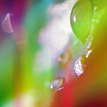 Rainbow Rain 2 by Alex Art and Photo