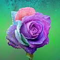 Rainbow Rose by Ericamaxine Price