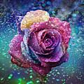 Rainbow Rose In The Rain by Ericamaxine Price