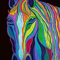 Rainbow Stallion by Nick Gustafson