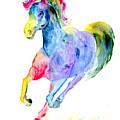 Rainbow Stallion by Sherry Shipley