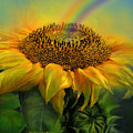 Rainbow Sunflower by Carol Cavalaris