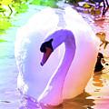 Rainbow Swan by Carol Groenen