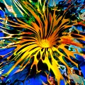 Rainbow Thunder Well by Tim G Ross