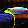Rainbow Toucan by Harry Spitz