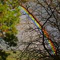 Rainbow Tree by Ben Upham III