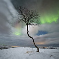 Rainbow Tree by Ronny Aarbekk