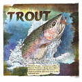 Rainbow Trout by John Dyess