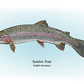 Rainbow Trout by Ralph Martens