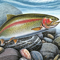 Rainbow Trout Stream by JQ Licensing