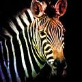 Rainbow Zebra by Athena Mckinzie
