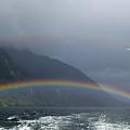 Rainbows by Jessica Rose