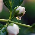 Raindrop Garden by Lori Tambakis