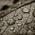 Raindrops #1 by Bethany Dhunjisha