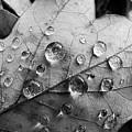 Raindrops by Daniel Csoka