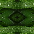 Raindrops On Green Leaves Collage by Carol Groenen