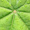 Raindrops On Leaf by Carol Groenen