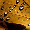 Raindrops On Leaf by Venetta Archer