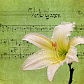 Raindrops On Lily by Judy Vincent