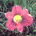 Raindrops On Lily by Warren Thompson