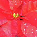 Raindrops On Red by D Hackett