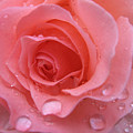 Raindrops On Roses And..... by Kathy Roncarati