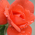 Raindrops On Roses by Cricket Hackmann