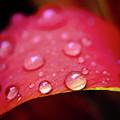 Raindrops by Robert Yaeger