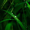 Raindrops  by Totto Ponce