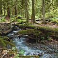 Rainforest At Bridal Veil Falls - British Columbia by Linda McRae