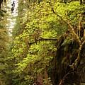 Rainforest Awakening by Carol Groenen
