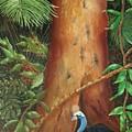 Rainforest Babies by Judith Baker