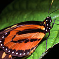 Rainforest Butterfly by Thomas R Fletcher