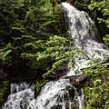 Rainforest Falls by Adam Morsa