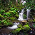 Rainforest by John Simon