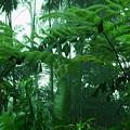 Rainforest by Marie Loh