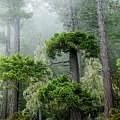 Rainforest by Michael Wheatley