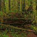 Rainforest Nurse by Adam Jewell