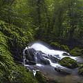 Rainforest Riverflow Scene by Luis Lyons