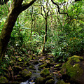 Rainforest Stream by Kevin Smith
