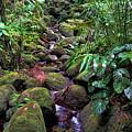 Rainforest Stream by Pamela Walton